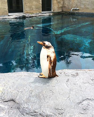 館内、館外のいたるところに様々なペンギン